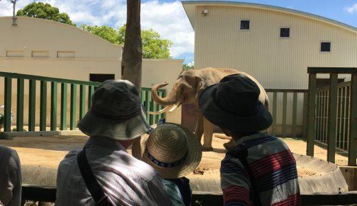 妊娠後期に上の子とお出かけはいつまで大丈夫か?!35週で動物園に行ってきた☆